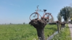 Lucht, fiets in boom